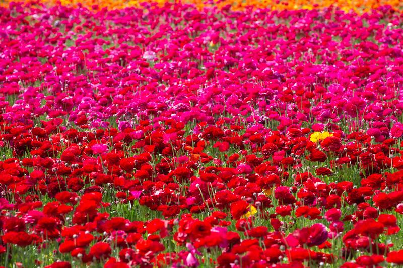 Spring Flowers B-478.jpg