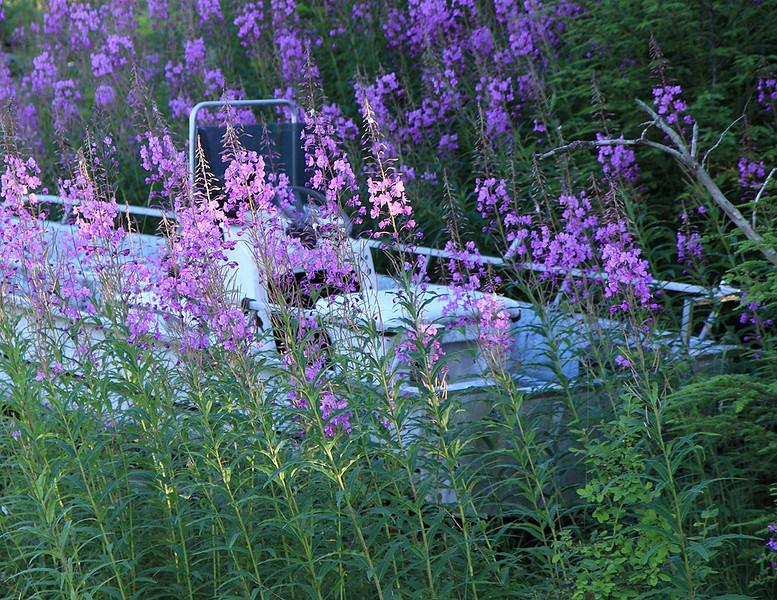 Flower Barge.jpg