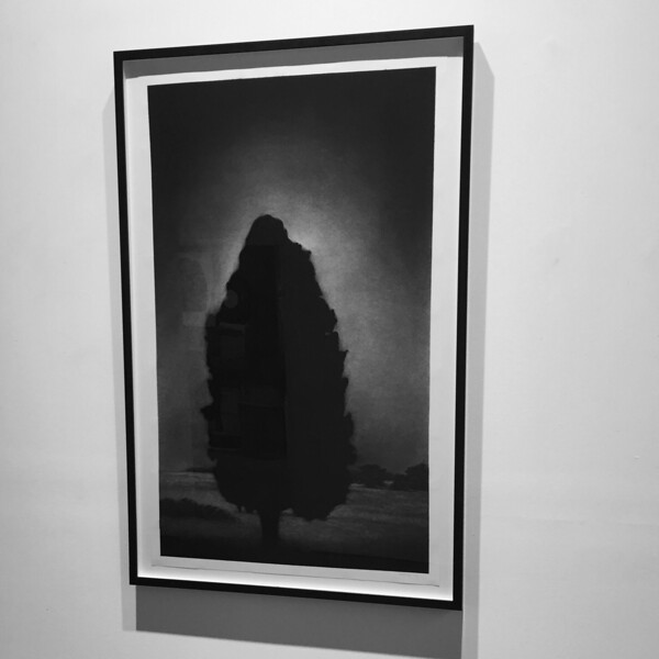 Illumination, charcoal on paper, Framed 121.5 x 78.4cm $6,500.