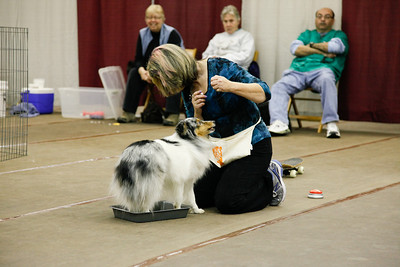 Canine Learning Experience SAT 26 Jan 2013