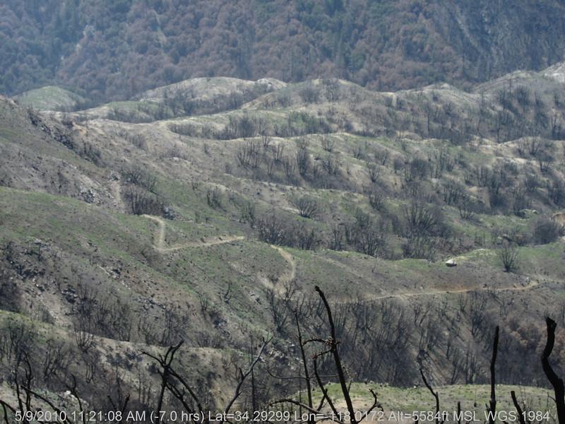20100509042-Trail Recon, Silver Mocassin (Charlton to Shortcut).JPG