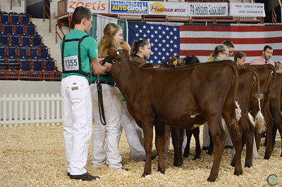 AA Junior Milking Shorthorn Show 2018
