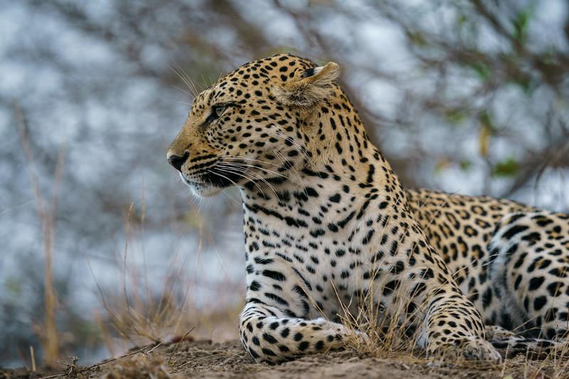 LeopardHills-20180929-0194.jpg