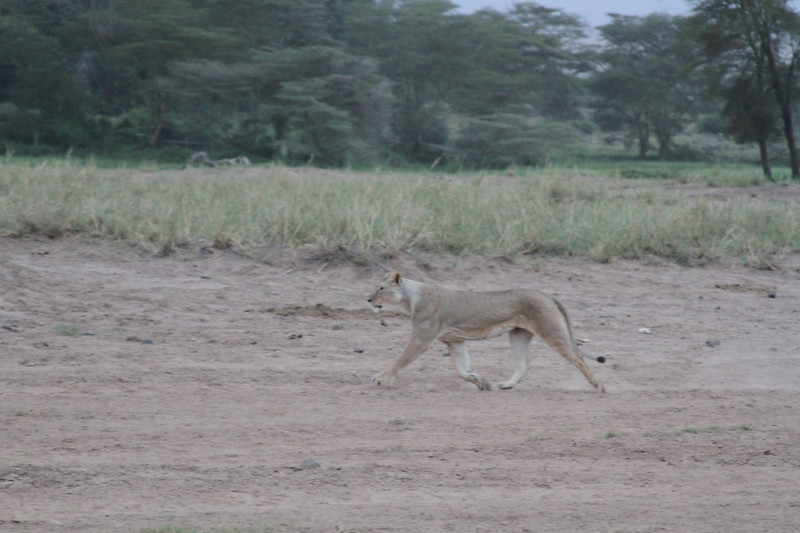 Kenya 2019 #2 1699.JPG