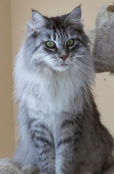 Kittens240.jpg