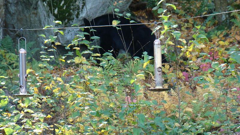 App.Trail Fall 2008,Fl. Maine 240.JPG