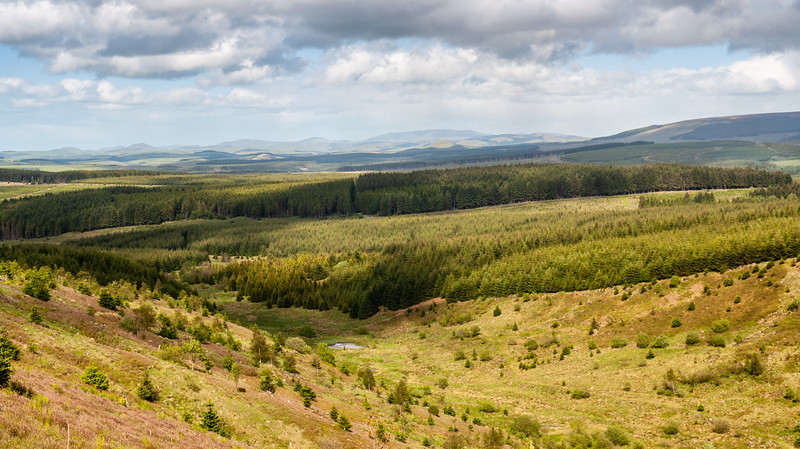 Wauchope Forest in the Scottish Borders