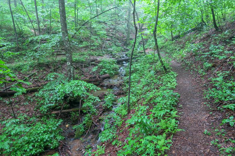 Mountains-to-Sea Trail -- 3,780'