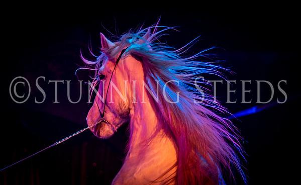 2020 Dec - Cavallo Equestrian Arts - Cirque Ma'Ceo