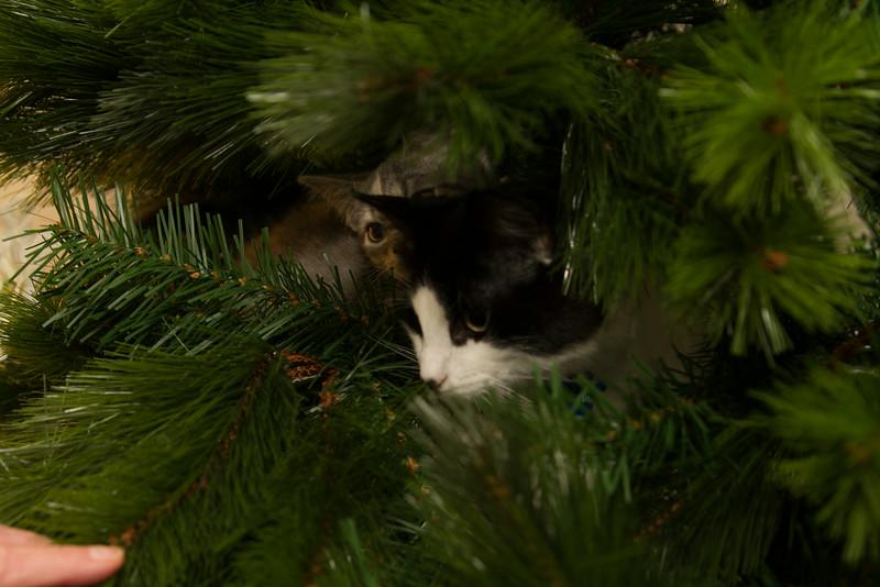 Christmas Day 2012-7087.jpg