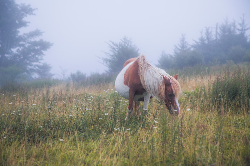Grayson Highlands Fog
