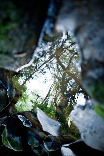 TreeAbstract1.jpg