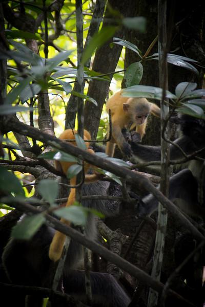 Borneo-2014-166.jpg