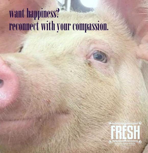 conscious-FreshGreenSmoothies_com-Vegan-Intelligent-Compassionate-raworganicvegan-plantbased-greensmoothies5213-001.jpg