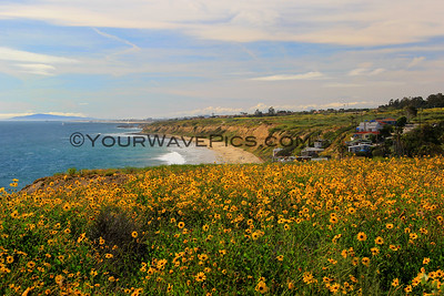 Best of Crystal Cove State Park