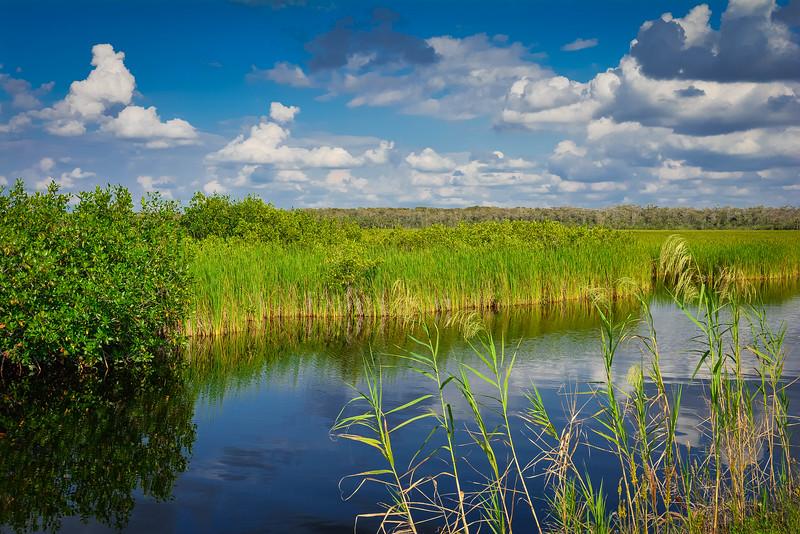 Everglades-48.jpg
