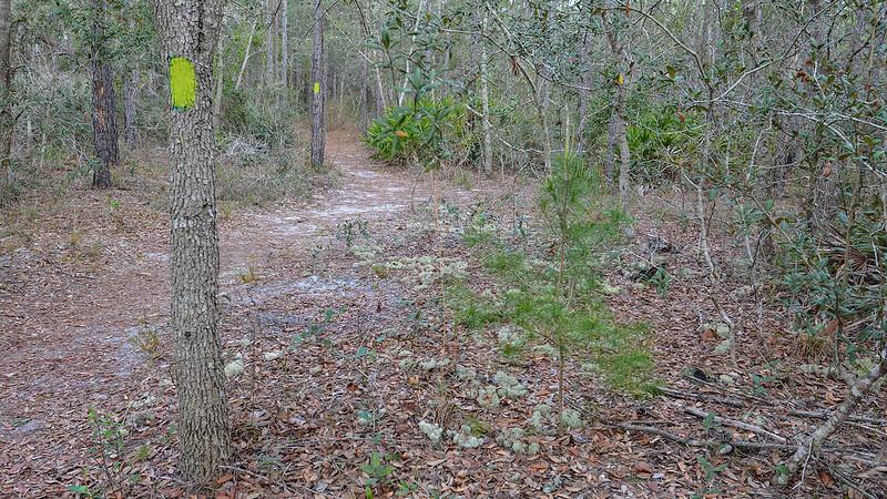 Buncombe Hill Tiger Bay