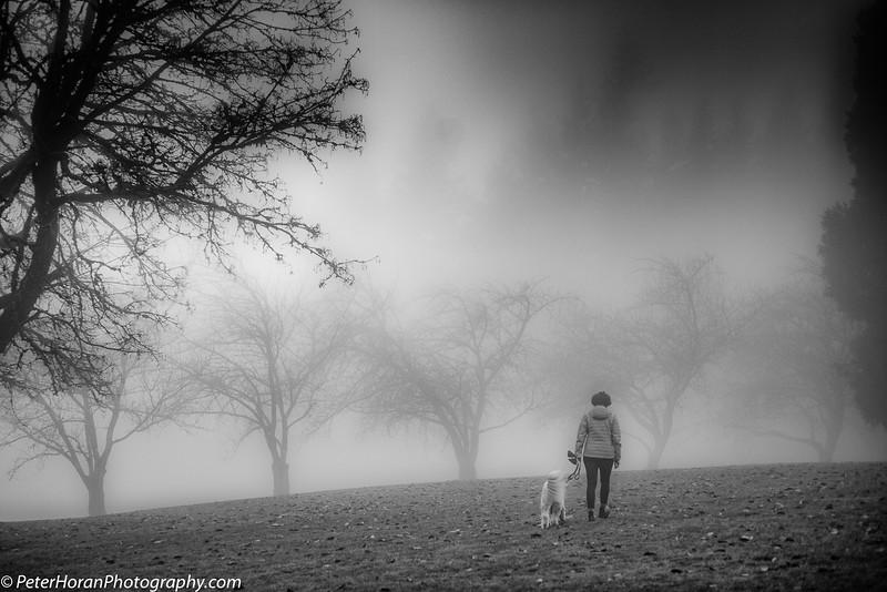 ghost-trees-2020-503-of-9_50649790986_o.jpg