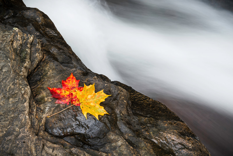 A Couple Leaves Natural Rock Slides Ohiopyle.jpg