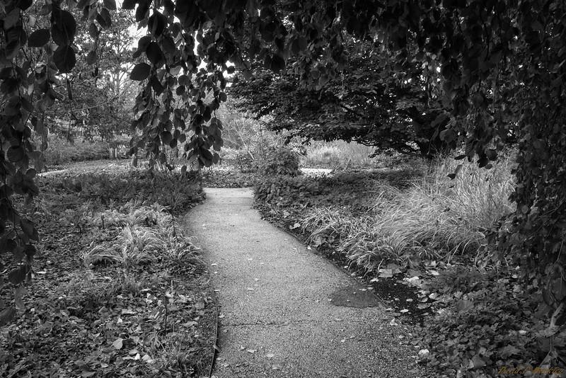 Low Trail