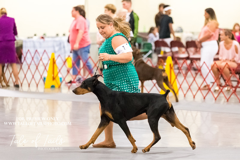 concord dobermans  (159 of 186).jpg