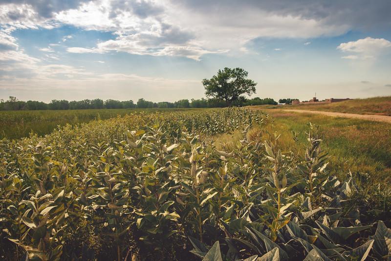 Bent's Field