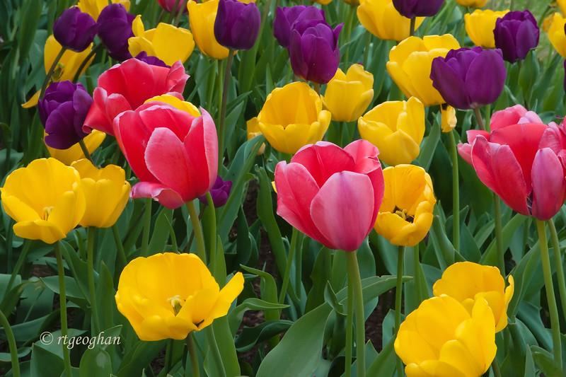 April 15_Tulip Garden_0886.jpg