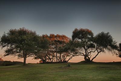 _DSC5209_HDR_ocean_course_trees