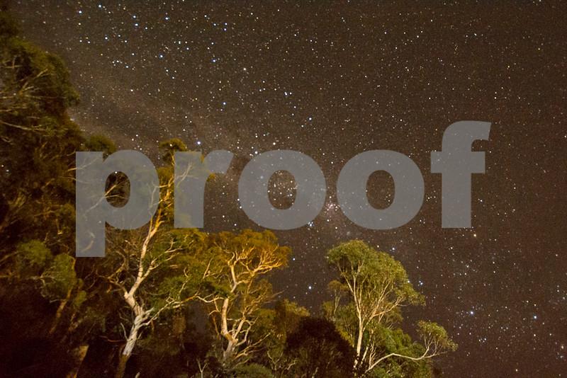 night sky trees_01.jpg
