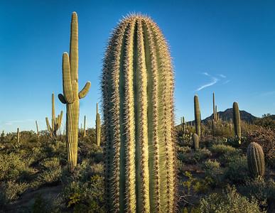 January Journey, Part 2 - Saguaro National Park