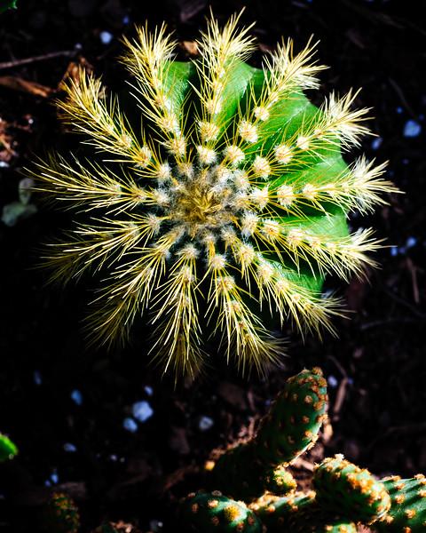 cactus-5448.jpg
