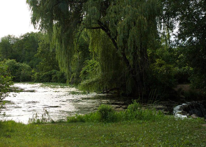 weepingtree5x7color.jpg
