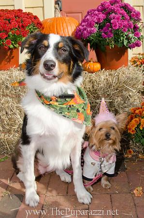 Fetch Halloween Web Gallery
