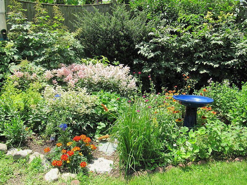 garden-2009-06-0750_std.jpg