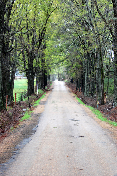 road firetower2.jpg