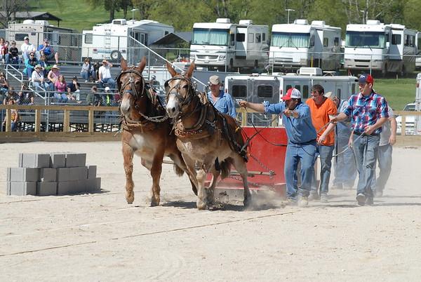 2010 Mule Pulling