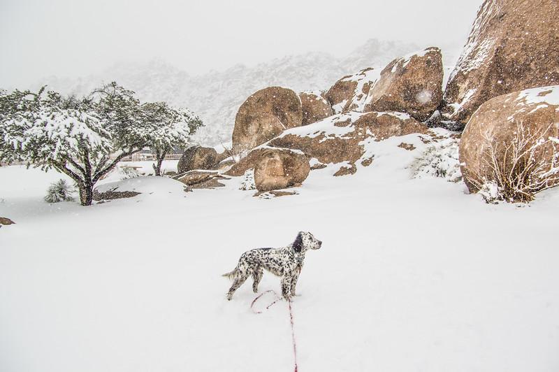Boole enjoying the snow, Texas Canyon, AZ (Feb 2019)