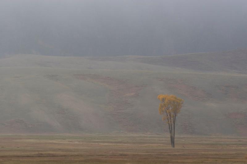 cottonwood-fog1.jpg