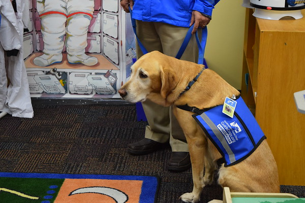 SouthEast Guide Dogs Visit AFA
