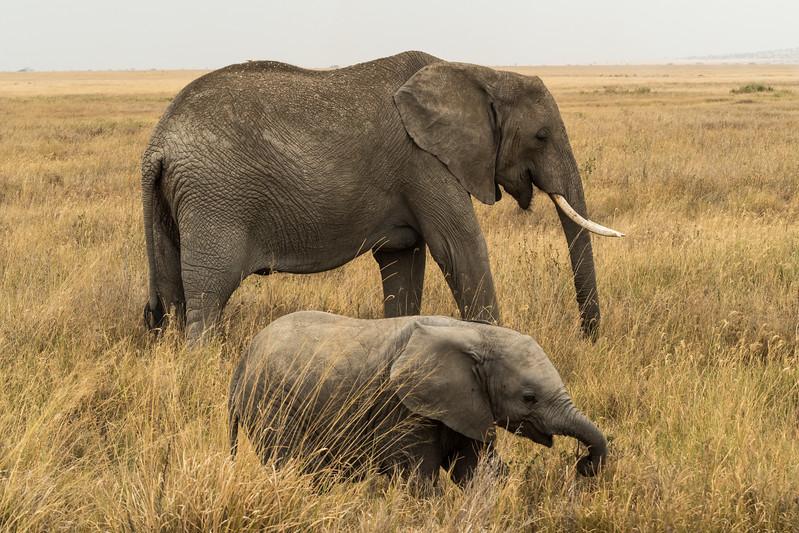 Tanzania_Safari-best-80.jpg