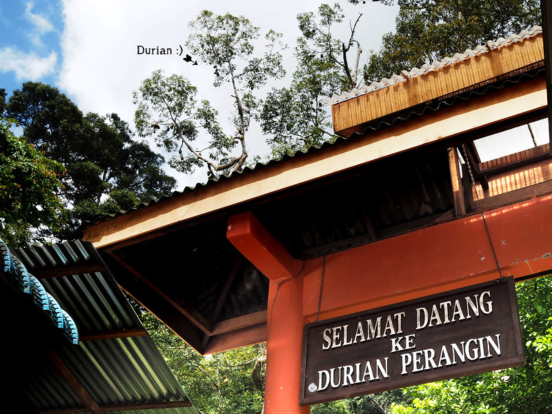 P7042220-durian.jpg
