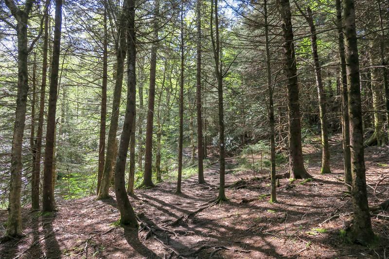 Mountains-to-Sea Trail -- 5,240'