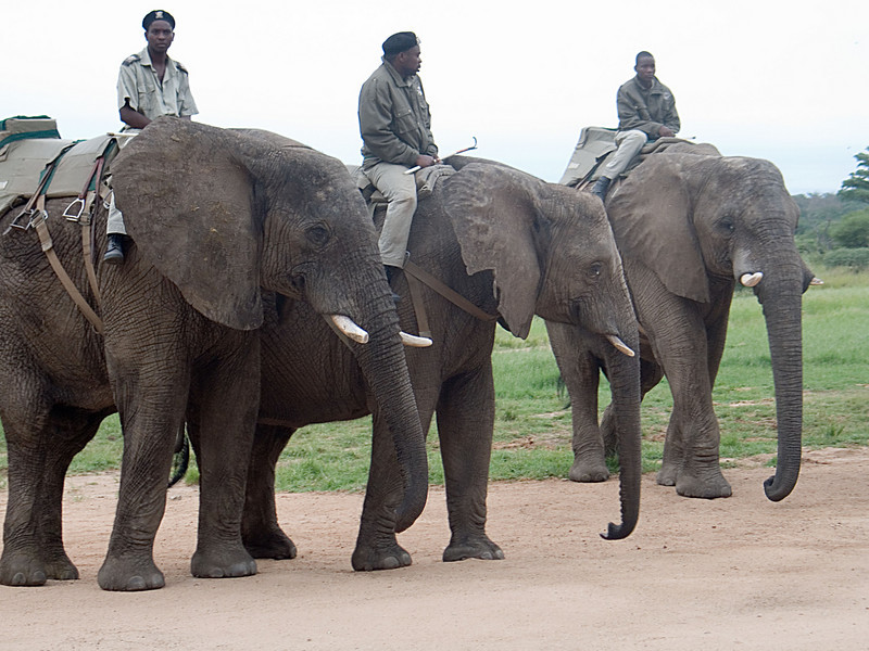 One morning I decided to try the Elephant Safari because riding in a jeep apparently wasn't enough fun.