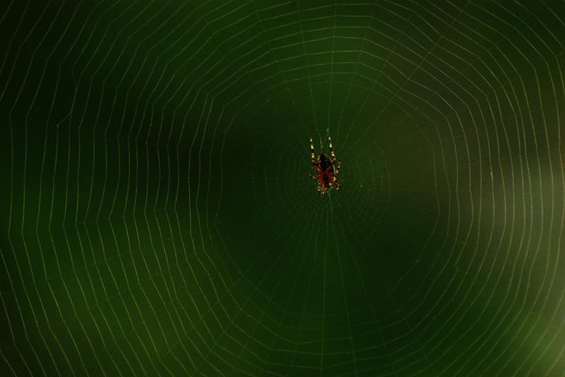 Araignée sur sa toile - Mabou, Nouvelle-Écosse
