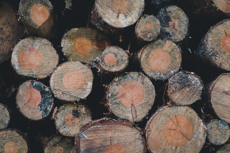 Pile-of-Logs-03.jpg