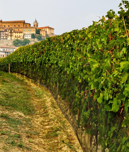 La Morra Vineyard