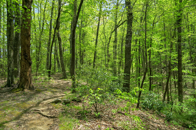 Laurel Creek Trail -- 2,950'