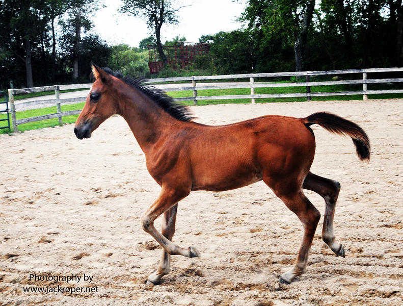 012 Stallion Fold .jpg