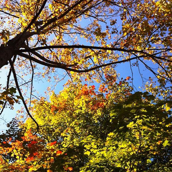 2011-10-19_1319062394.jpg