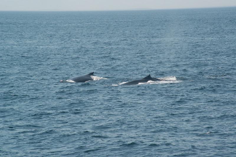humpbacks-4169.jpg